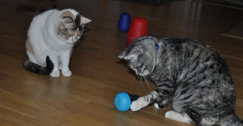Katterna Stina och Piffi