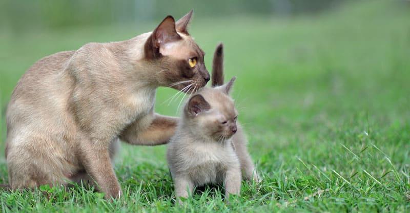Kattmamma med sin kattunge