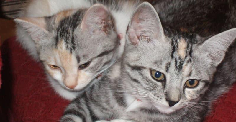 Två kattungar- Stina och Piffi