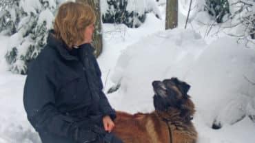 Kvinna med hund- Cão da Serra da Estrela kontaktövning