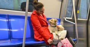 Kvinna åker tunnelbana med sin lilla hund