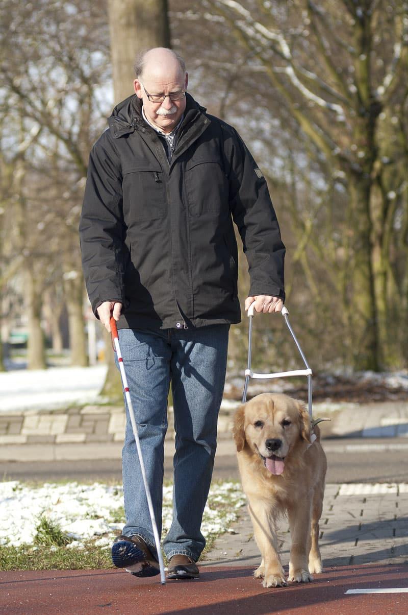 Äldre man med ledarhund