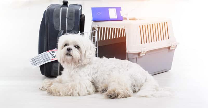 Liten hund bredvid resväska och hundbur