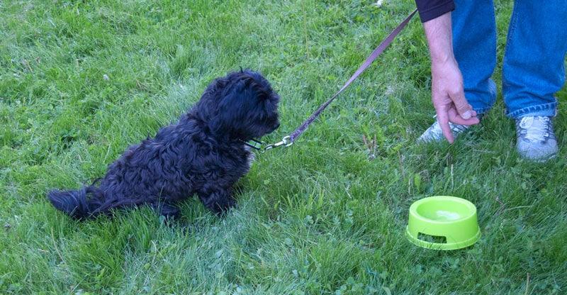 Liten hund tränar på sitt frikommando