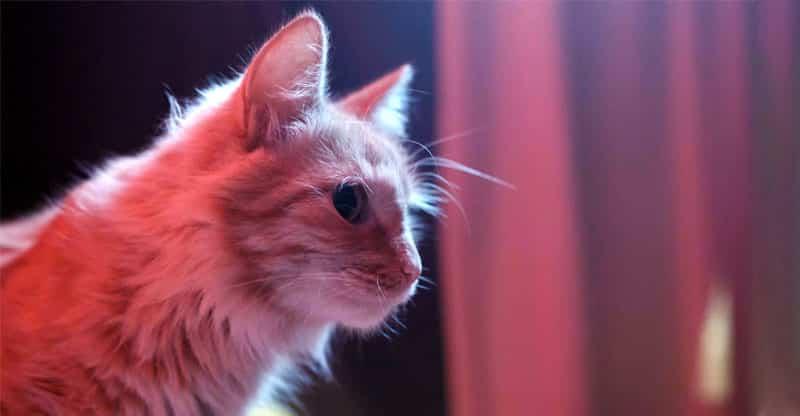 Ljus katt i svagt ljus