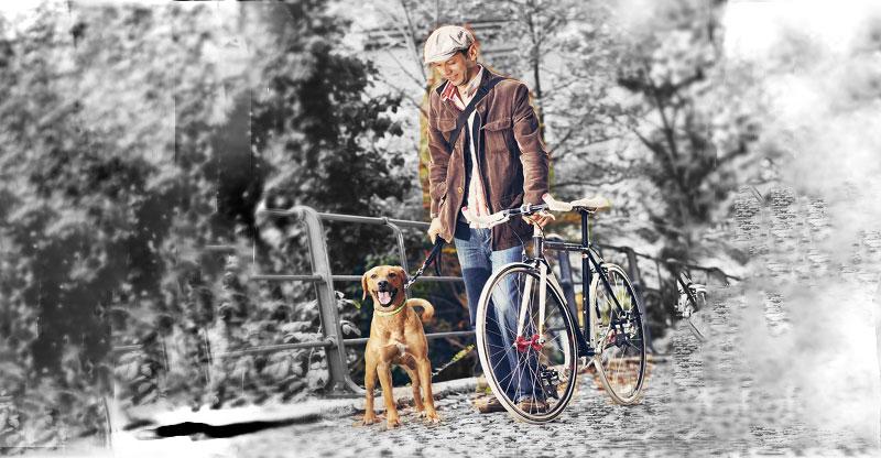 Man går med en cykel och en hund
