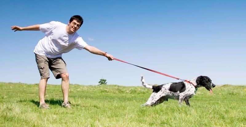 Man och hund drar i kopplet