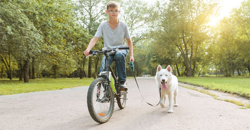 Pojke som cyklar med sin hund