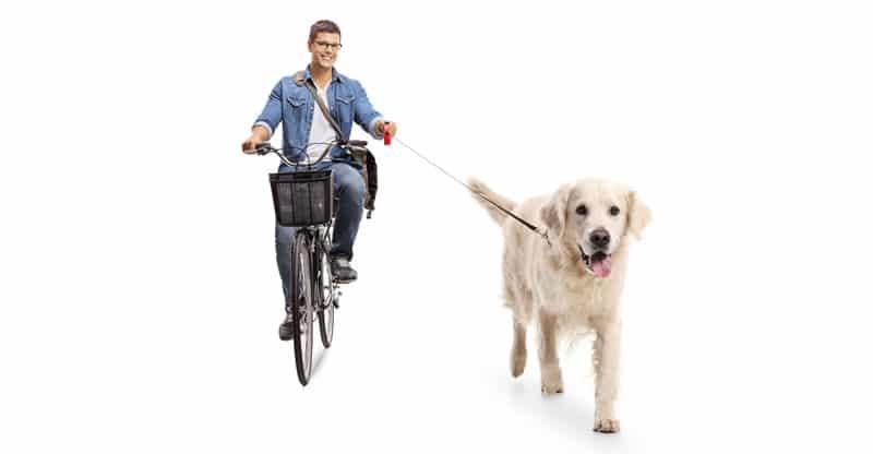 Ung man cyklar med sin hund