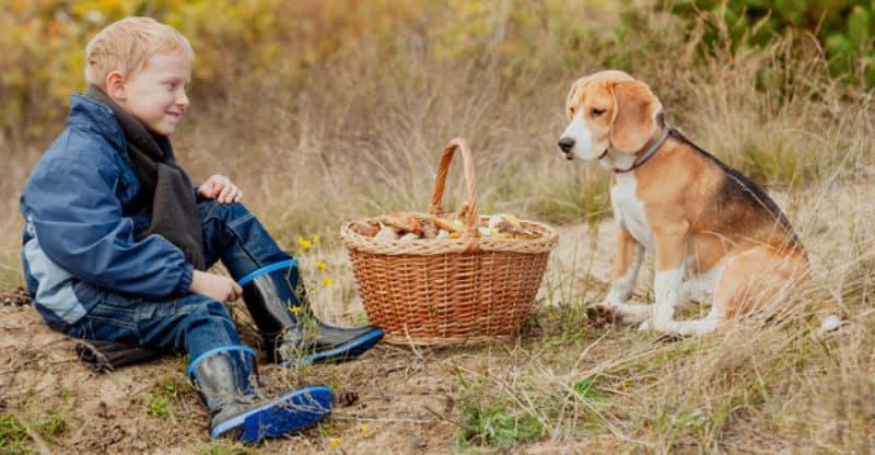 Pojke och hund med svampkorg i skogen