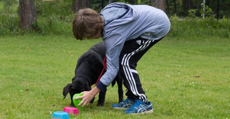 Pojke tränar med sin labrador