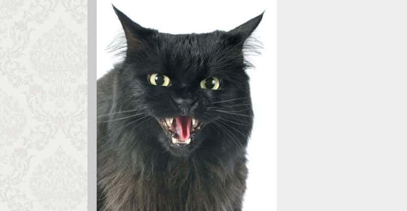 Svart katt som fräser ilsket