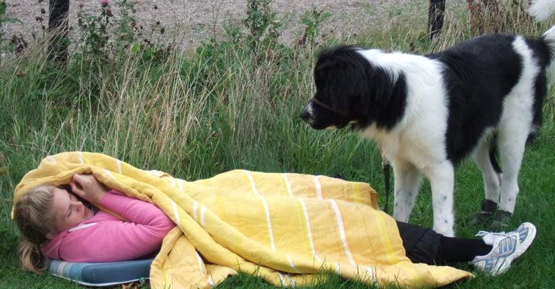 Hund hittar sin matte under en filt