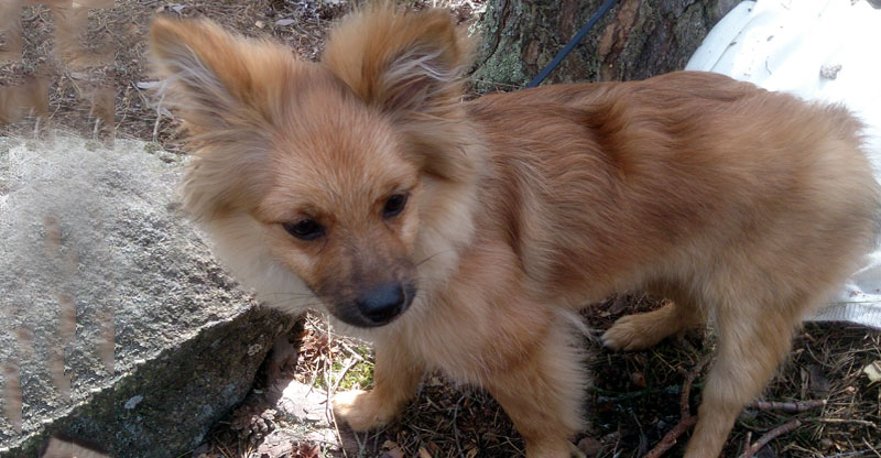 Zimba- en liten blandrashund